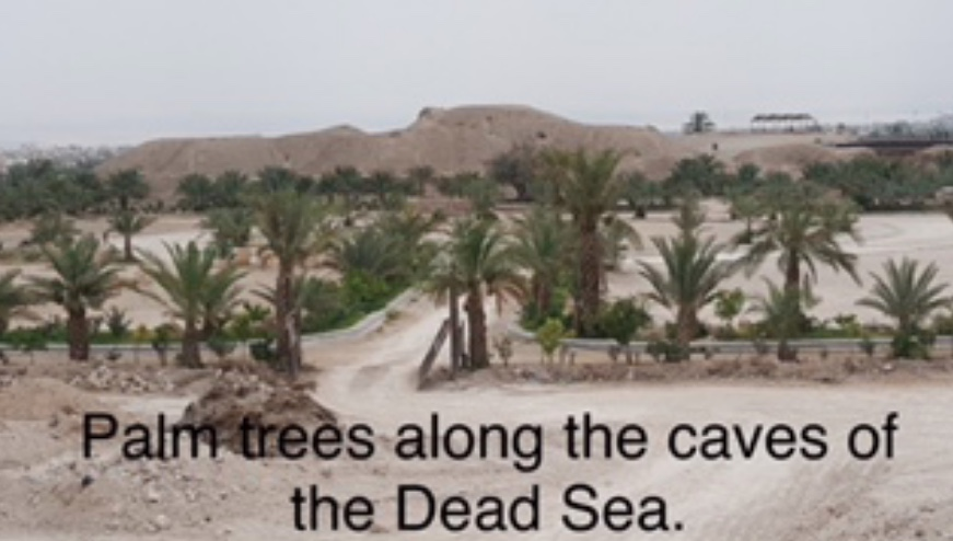 Palm trees along the caves of the Dead Sea