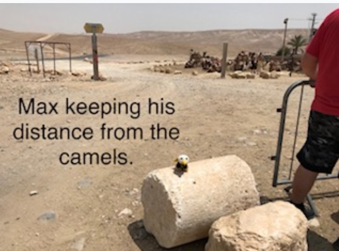 Max keeping his distance from the camels