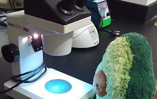 Aracely Newton - avocado with microscope