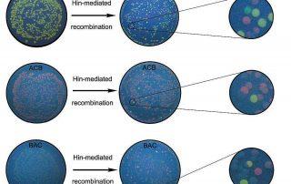 Dr. Todd Eckdahl chart