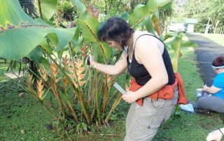 heliconia project