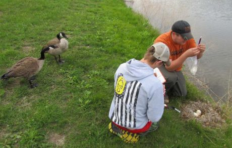 MWSU biology students - field research - geese - campus pond