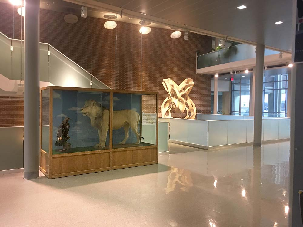 eagle and lion taxidermy in Remington Hall at Missouri Western
