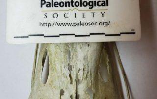Paleontological Society