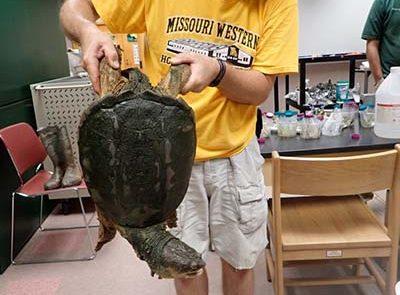 Dr. Mark Mills displaying turtle