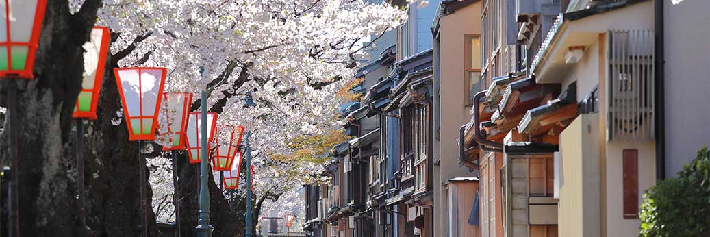 Kanazawa cherry blossoms